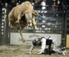 Aaron Roy falls from the bull Buck Wild