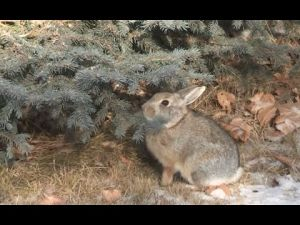 How bunny rabbits stay warm