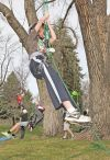 Zach Cromwell climbs a tree