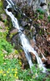 Flowered falls