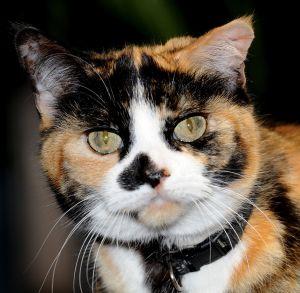 Pet of the week: Lucki