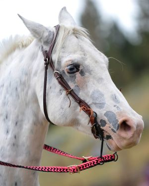 A spotted horse