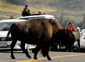Yellowstone reports record number of visitors