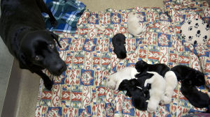 Dog and 10 puppies abandoned near garbage bin in Grand Forks