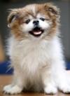 Pet of the week: Magoo