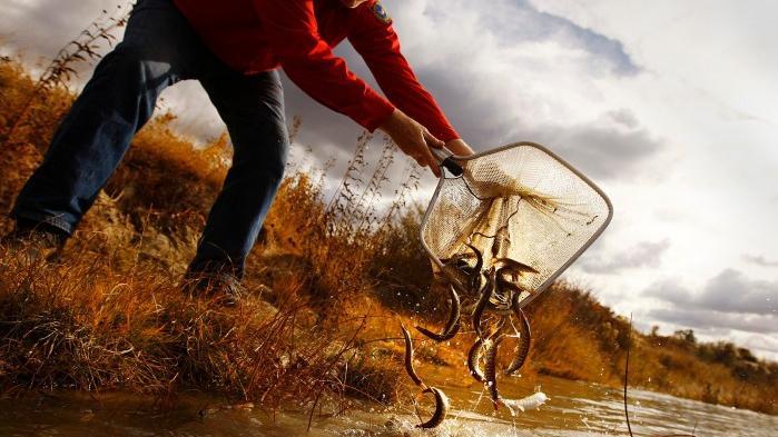 Wyoming game and fish proposes cutting habitat education for Wyoming game and fish jobs