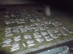 Washington arrests 3 men with 376 whitefish