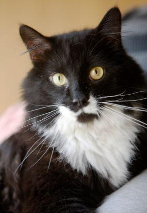 Pet of the week: Cheshire