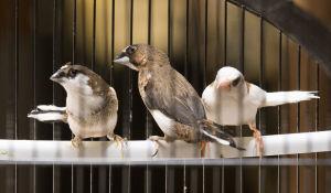 Pets of the week: Maynard, Mulligan and Matilda