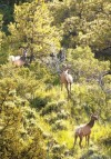Nation's wildlife refuges face tightening budgets
