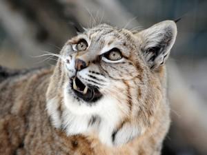 Wildlife Jamboree offers free post-Fourth family fun