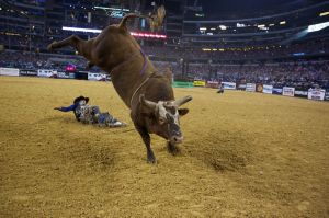 Bushwacker will be the star of Billings PBR event