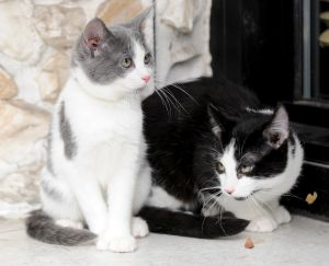 Pet of the Week: Rebel and Rindy