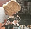 Diane Stratford puts  a 7-week-old Chihuahua back in its kennel