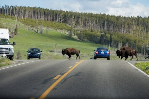 Yellowstone National Park finds traffic safety violations