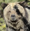 Wyoming Supreme Court to hear grizzly records case