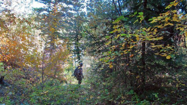 Elk encounter nurtures ties to wildlife, mountains