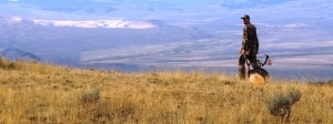 Free guide offers advice on elk decoy setup