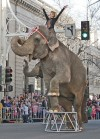 Mychelle Omar and Shrine Circus Elephants