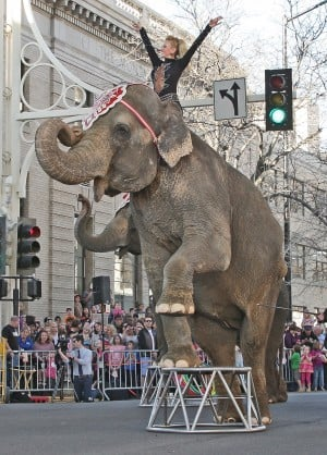 Gallery: Shrine Circus