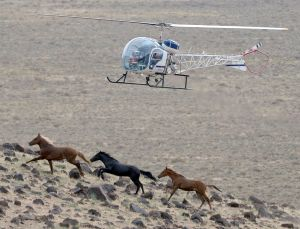 Guest opinion: Wild horses, urban deer, roaming bison and dead ideas