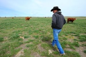 Back to the pasture: Grass-fed beef is healthier, tastier, Worden ranchers say