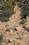 Bighorn Canyon tepee pole
