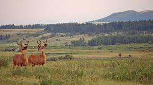 Wildlife officials ask hunters to help track wasting disease
