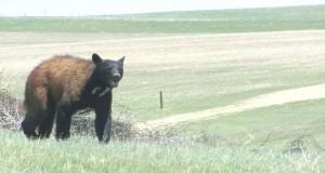 Montana hunters getting free bear spray