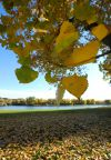 Fall colors at Riverfront Park