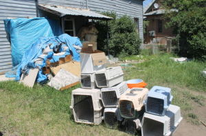 Man charged with cruelty to animals; nearly 100 cats removed from apartment
