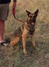 Billings police K-9 unit working to add two new dogs