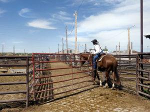 Livestock Department faces $400K budget shortfall