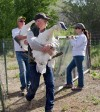 Wyoming volunteers work to boost swan population