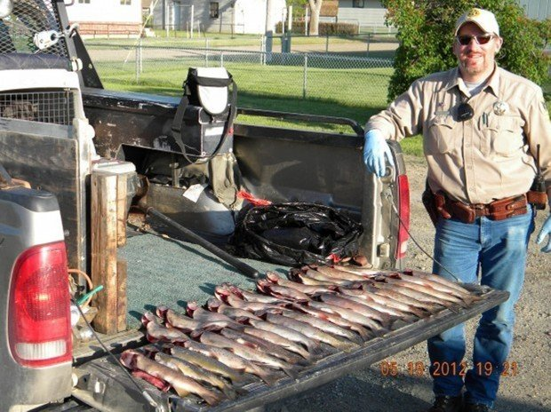 Opening day tip nets ruby river trout poachers montana for Fish and game warden