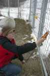 Bear Mauling Zoo Debut