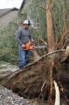 Sean Jensen cuts up a fallen tree