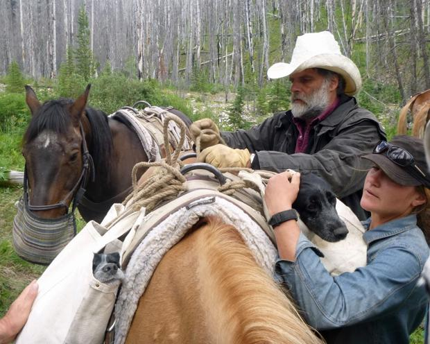 Horses for hounds