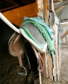 A saddle hangs in a stall door