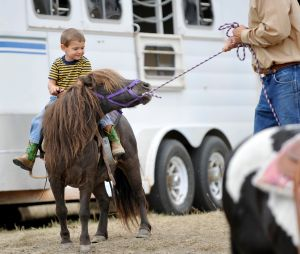 Stubborn pony