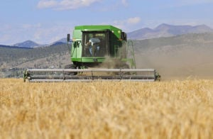 Montana-made malt: Booming barley business supplies local brews