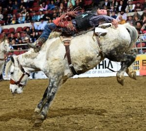 chasehawks rodeo gallery