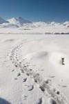 Waddle tracks