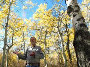 Successful aspen regeneration project may be trimmed