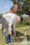 Ferrier Jesse Turner shoes a horse