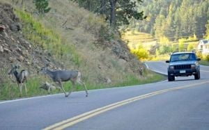 Deer-vehicle crashes decline in state, but odds of hitting one are still high