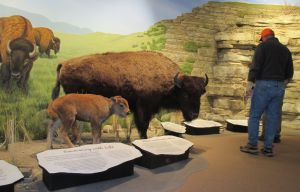 First People's Buffalo Jump provides window to native history