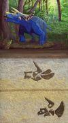 Triceratops evolution