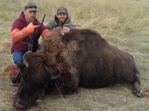 Tyler's bison