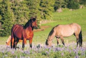 Horse advocates seek higher help